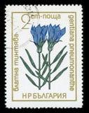 Francobollo protetto di serie del ` dei fiori del ` della Bulgaria, 1972 Immagine Stock