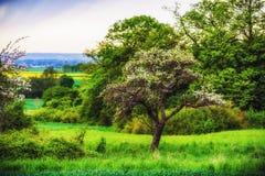 Franconian Spring Royalty Free Stock Photo