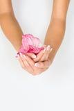 Francuski manicure i menchia kwiat Obrazy Stock