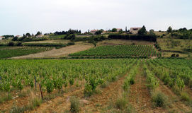 Francuski winnica w przodzie Zdjęcie Royalty Free