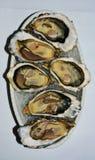 Francuskie ostrygi, odizolowywać Zdjęcie Royalty Free