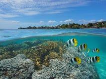 Francuskiego Polynesia Tahiti ryba z kurortem i koral Zdjęcie Stock