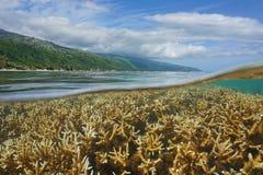 Francuskiego Polynesia Tahiti wyspy koral i linia brzegowa Obrazy Stock
