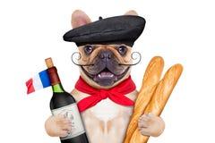 Francuskiego wina pies fotografia royalty free