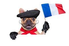 Francuskiego wina pies obraz royalty free