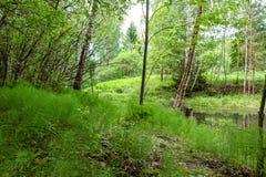 Frange pittoresque devant un étang photo libre de droits