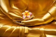 Frangipan in der Hand von Buddha Stockbilder