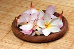 Frangipane Blume auf dem Rattanhintergrund Lizenzfreies Stockbild