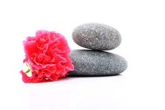 Frangipane e Zen Stone Fotografia Stock