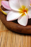 Frangipane flower on the rattan background. Frangipane flowers on a wooden dish on the rattan background Stock Photos