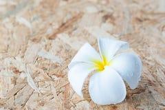 Frangipane tropicale dei fiori su legno Fotografia Stock