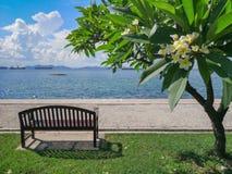 Frangipani, árvore do Plumeria ao lado da praia em Koh Sichang, Chonburi, Imagem de Stock Royalty Free