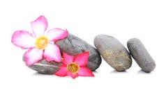 Frangipani και Zen Stone Στοκ φωτογραφία με δικαίωμα ελεύθερης χρήσης