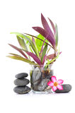 Frangipani και Zen Stone Στοκ Φωτογραφίες