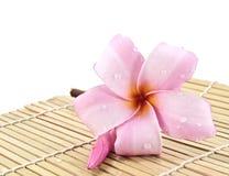 frangipani λουλουδιών μπαμπού Στοκ φωτογραφίες με δικαίωμα ελεύθερης χρήσης
