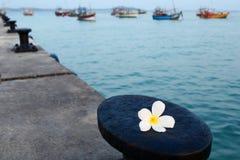 Frangipani λουλουδιών στο υπόβαθρο της αποβάθρας, των βαρκών και του ωκεανού Στοκ φωτογραφία με δικαίωμα ελεύθερης χρήσης