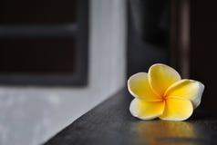 frangipani Fotografia Royalty Free