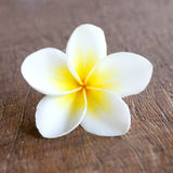 Frangipani. On a wooden surface royalty free stock images