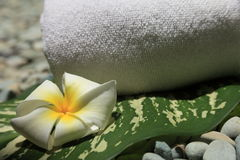 Frangipani. White towel, Frangipani and leaf, taken at a Thai Spa Stock Images