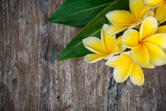 Frangipani Fotos de Stock Royalty Free
