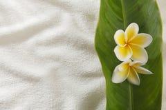 Frangipani amarillo Foto de archivo libre de regalías