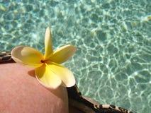 Frangipani amarillo en el top bikini Foto de archivo libre de regalías