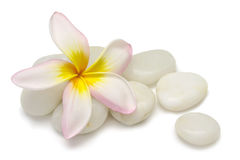 Frangipani And Pebbles Royalty Free Stock Photos