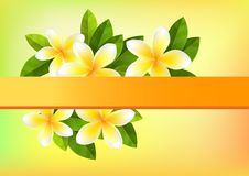 Frangipani background. Tropic orange background with frangipani and green leaves Stock Images