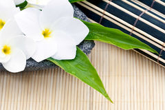 Frangipani and bamboo Royalty Free Stock Image