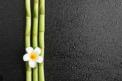 Frangipani and bamboo Royalty Free Stock Photos