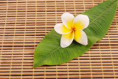 Frangipani on bamboo mat Stock Photos