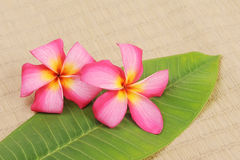 Frangipani on bamboo mat Stock Photo