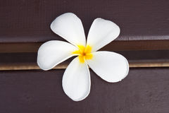 Frangipani on a bench Royalty Free Stock Photo