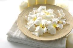Frangipani bianco Immagini Stock
