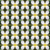Frangipani blüht, ein Blumenstrauß von den nahtlosen Blumen lizenzfreie abbildung