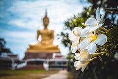 Frangipani blüht mit Wassertropfen- und Unschärfebuddha-Statue Lizenzfreies Stockbild