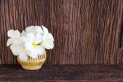 Frangipani blanco Fotografía de archivo