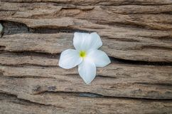 Frangipani blanco del pudica del Plumeria, ramo de las rosas en la madera vieja Fotos de archivo