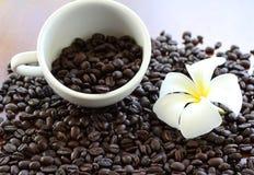 Frangipani bonito com os feijões de café Roasted Fotografia de Stock Royalty Free