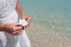 Frangipani bonito da flor Fotografia de Stock