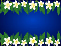 Frangipani  border Stock Photography