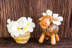 Frangipani branco Imagens de Stock