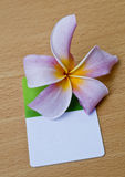 Frangipani and card. Fresh Frangipani and Business Card Stock Photo