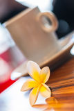 Frangipani and coffee Stock Image