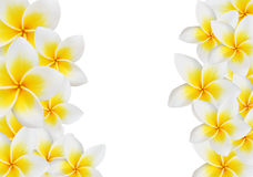 Frangipani design collage. Stock Image