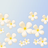 Frangipani design collage Royalty Free Stock Image