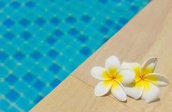 Frangipani durch einen Swimmingpool lizenzfreie stockfotos
