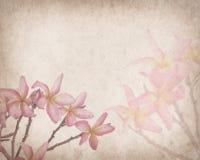 Frangipani eller tropisk blomma för plumeria med gammalt papper Arkivbilder