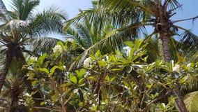 Frangipani en palmen stock afbeelding