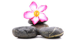 Frangipani en Zen Stone Royalty-vrije Stock Afbeelding